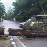 Pengendara Asal Sumenep Tewas Tertimpa Pohon di Tangerang