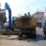 Payah, Rekanan Proyek Tebang Ratusan Pohon Didalam Kota