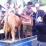 Aksi pencurian sapi Desa Guluk-guluk marak. Polsek setempat dinilai tak berkutik. (Aba Fauzi Permata)