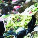 TPA Batuan Diharapkan Tak Sekadar Lumbung Sampah