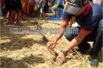 Warga Sampang Geger Temuan Sepasang Ular Piton Sanca Kembang