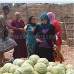 Jualan Semangka di Pamekasan, Pedagang Sumenep Laris Manis