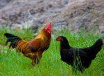 Jatah Iklan Online di Humas Pemkab Sumenep, Seharga 2 Ekor Ayam Kampung