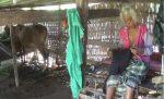 Nenek Perawan Tidur Dikandang Sapi, Pemkab Sumenep Harusnya Buka Mata!!!