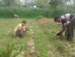 Anomali Cuaca, Petani Madura Nekad Tanam Tembakau