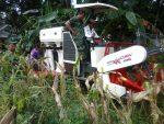 Dandim Himbau Danramil dan Babinsa Pendampingan Petani Jagung