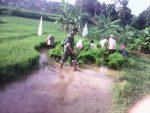 Babinsa 0827/11 Pasongsongan Lakukan Pendampingan Pertanian di Desa Lebeng Timur