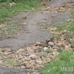 Mayoritas Kondisi Aspal di Pelosok Kecamatan Rubaru dan Pasongsongan Mengelupas
