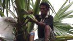 Manfaat Lain Dari Minuman Tuak  Asal Lombok NTB