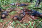 Tembak Mati di Tuban, Komnas HAM Duga Densus 88 Menentang Prinsip HAM