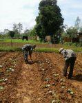 Babinsa Rubaru Bersih-Bersih Rumput Dilahan  Pertanian  Warga