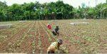 Babinsa Sukarela Pulau Masalembu Gelar Komsos Diwilayah Binaan