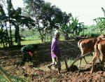 Babinsa Bataal Timur Koramil Ganding Bantu Petani Tanam Jagung