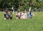 Bersama PPL, Babinsa Saronggi Monitoring Perkembangan Tanaman Padi