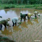 Babinsa Dasuk Bantu Petani Wujudkan Ketahanan Pangan