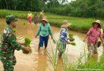 Gandeng Petani, Babinsa Koramil Dasuk Wujudkan Ketahanan Pangan Nasional