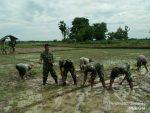 Battituud dan Ka. UPT Pertanian Saronggi Tanam Padi
