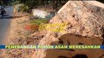 Penebangan Pohon Desa Jabaan, Kec. Manding Sumenep Berbuntut Panjang