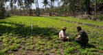 Babinsa Sertu M. Jakfar Bantu Petani Merawat Tanaman Kacang Tanah